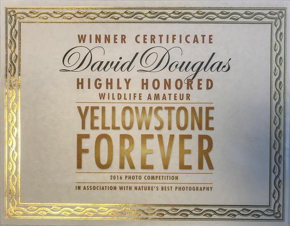 YellowstoneForever